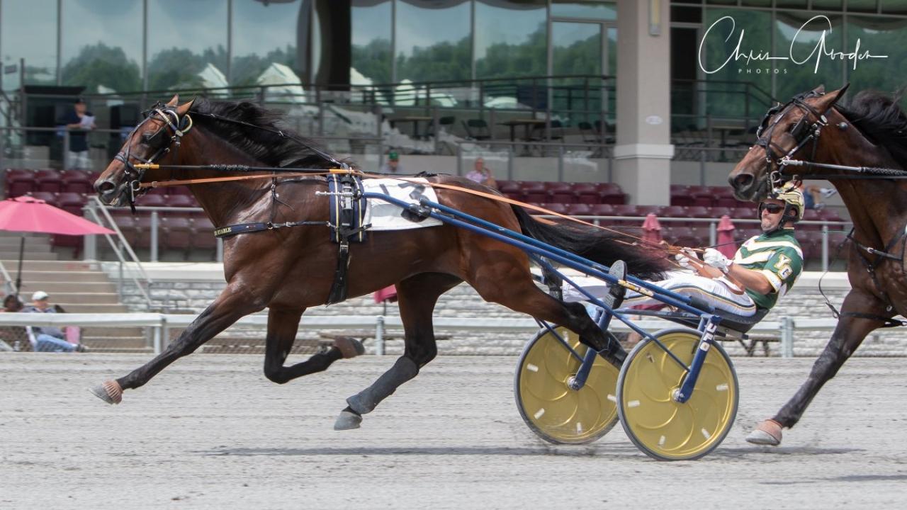 Demon Onthe Hill fortsätter att imponera och idag slog han till på Meadows i ett försök i Pennsylvania Sire Stakes. Foto: Chris Gooden