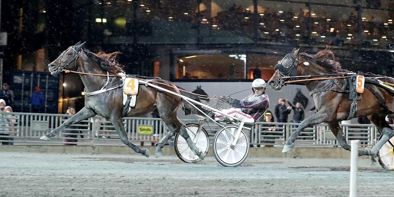 Makethemark är en av fyra heta hästar i gulddivisionen. Foto Mia Törnberg