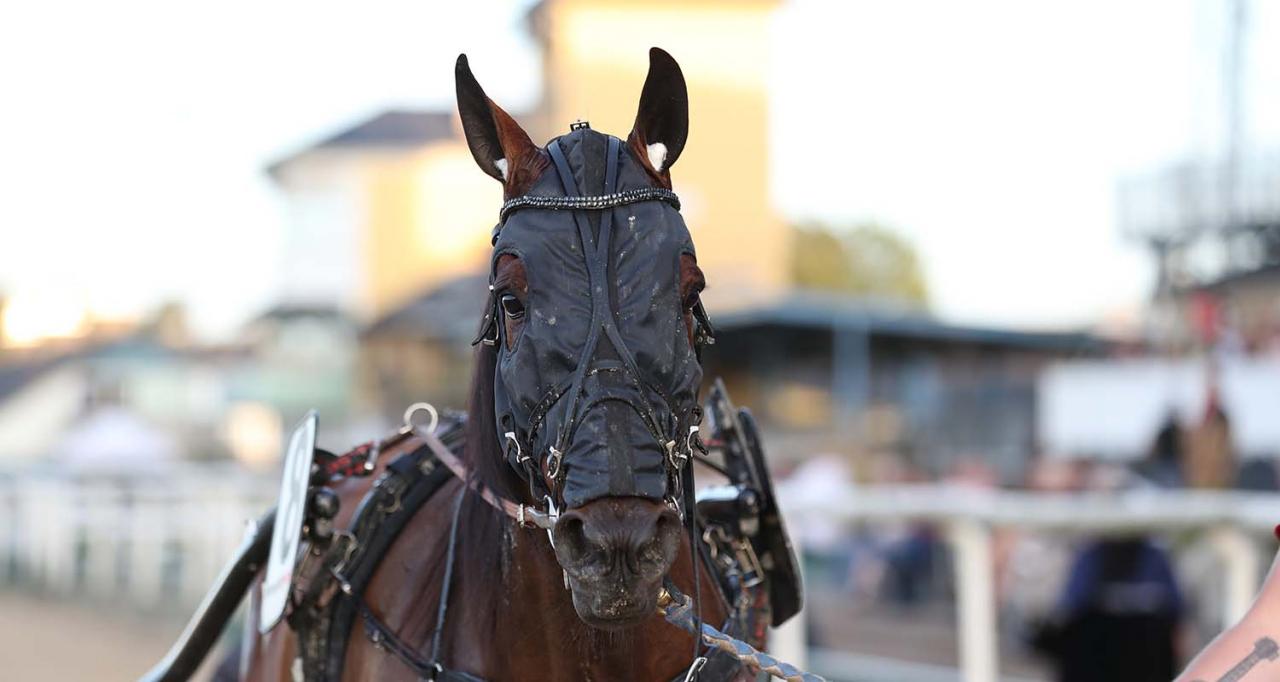 Spickleback Face spänner ögonen i konkurrenterna i Rättvik ikväll. Foto Jeannie Karlsson/Sulkysport