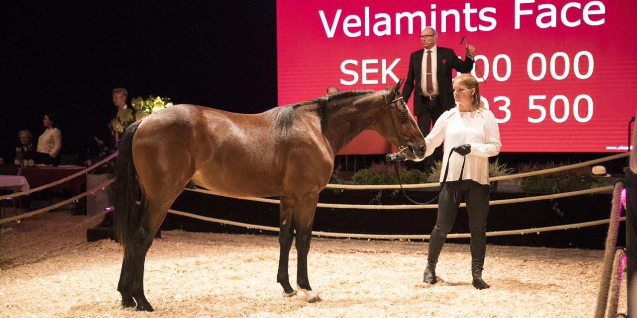 Pia och Berndt Denberger, paret bakom Stall Denco HB, var i farten och köpte bland annat Velamints Face. Foto: Mia Törnberg/Sulkysport.