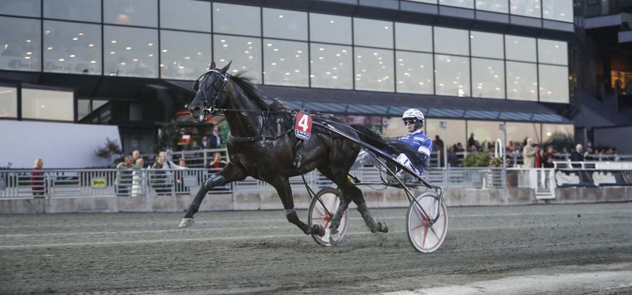 Attraversiamo gjorde ett mycket gediget Kriteriekval och blir att räkna med i finalen. Foto Jeannie Karlsson/Sulkysport