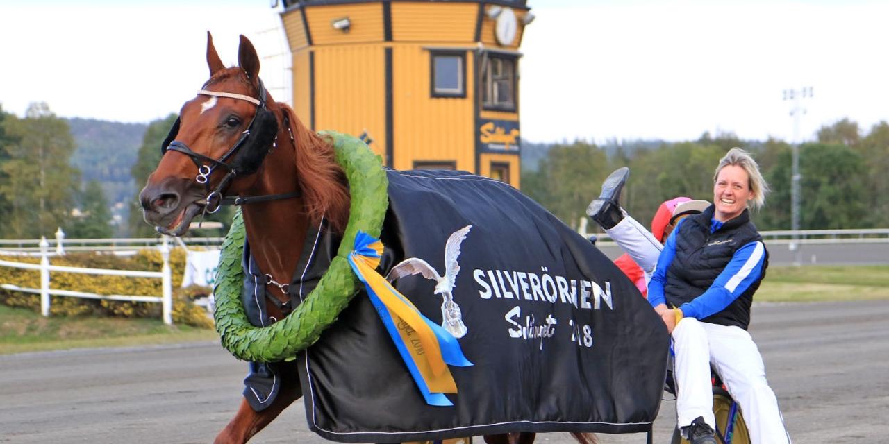 Fuxige Timoko-sonen Dreammoko har tjänat över 5,2 miljoner kronor. Nästa söndag kan han fylla på kontot ytterligare när han startar i Mastersfinalen i Östersund. Foto Girlpower/TR Bild