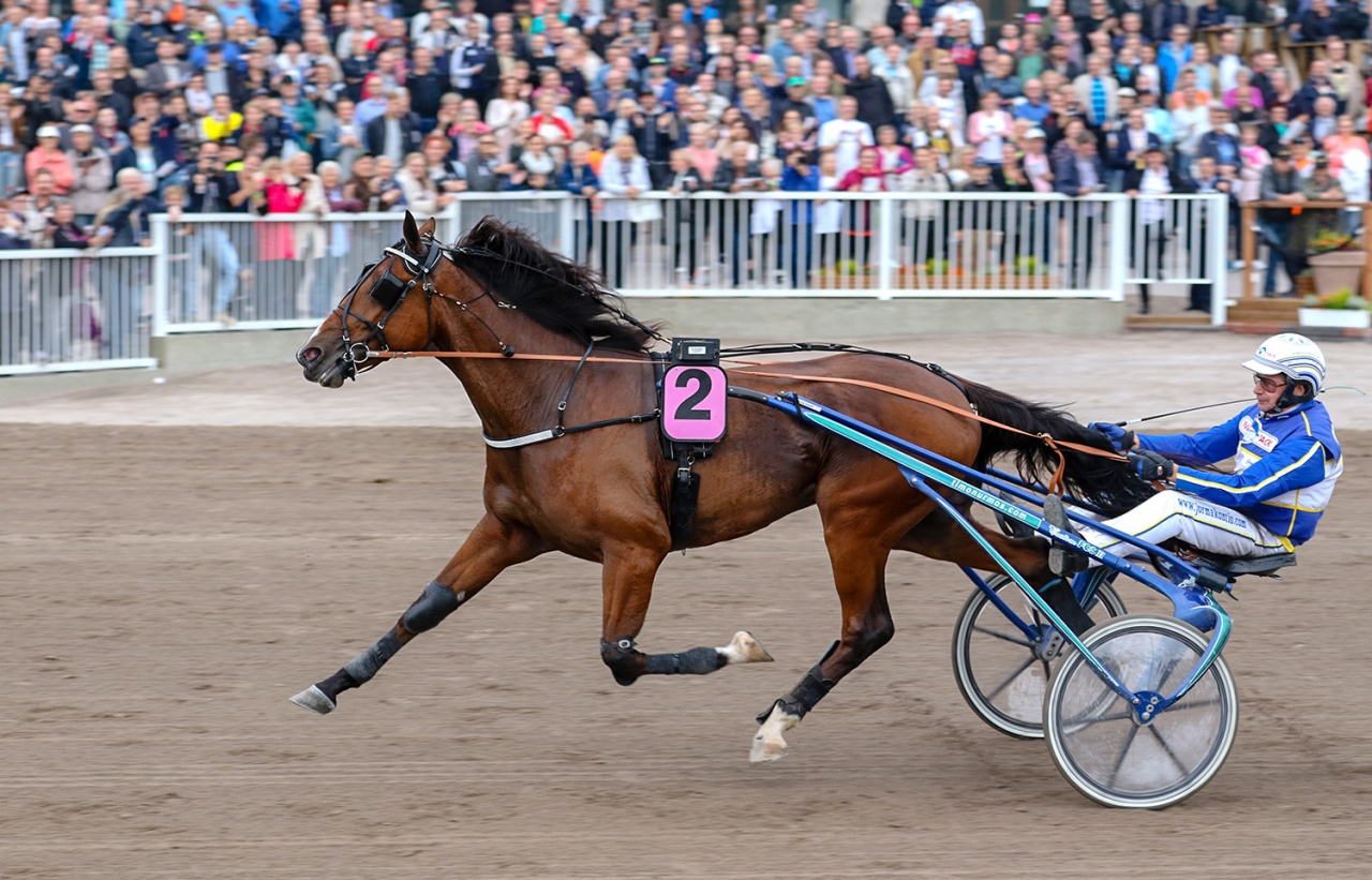 Kan Hachiko de Veluwe vinna Jubileumspokalen?  Foto: Anu Leppänen / Ravinetti.fi