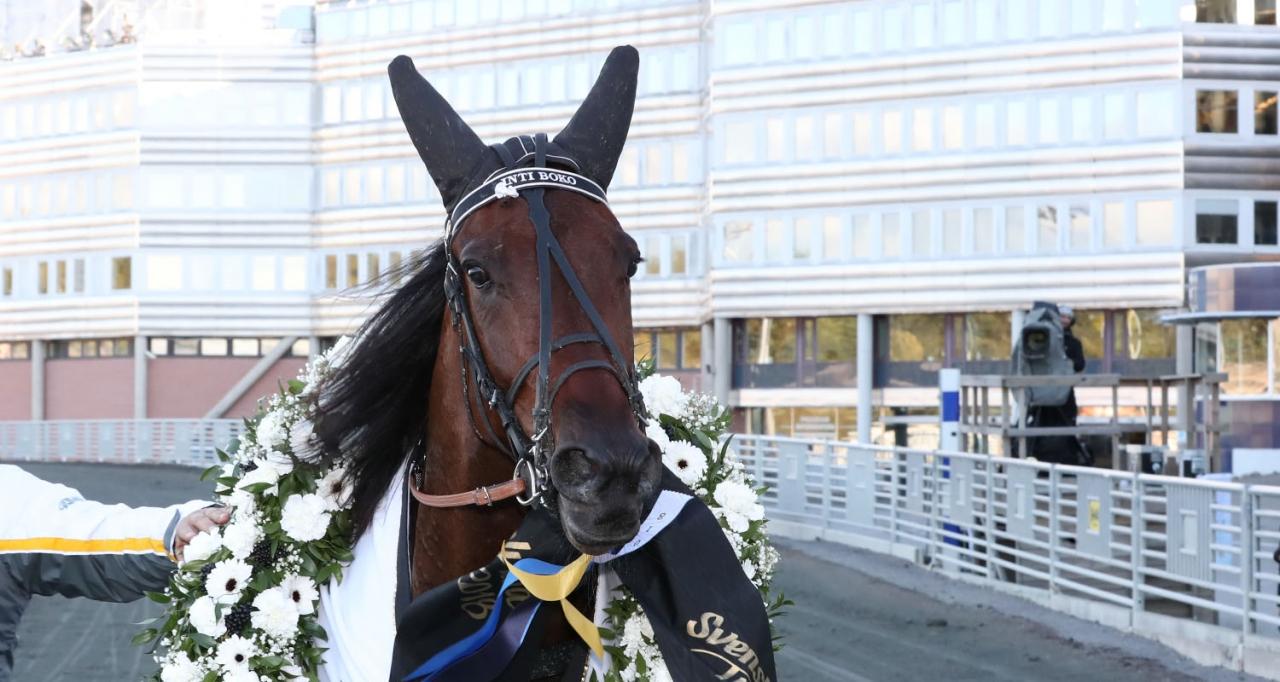 Inti Boko är tillbaka på tävlingsbanan i Eskilstuna Fyraåringstest. Foto Jeannie Karlsson/Sulkysport