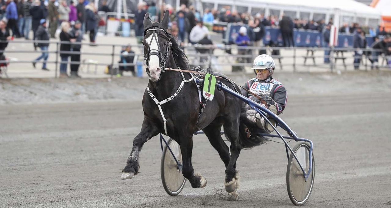 Tekno Odin och Ulf Ohlsson. Foto Jeannie Karlsson/Sulkysport