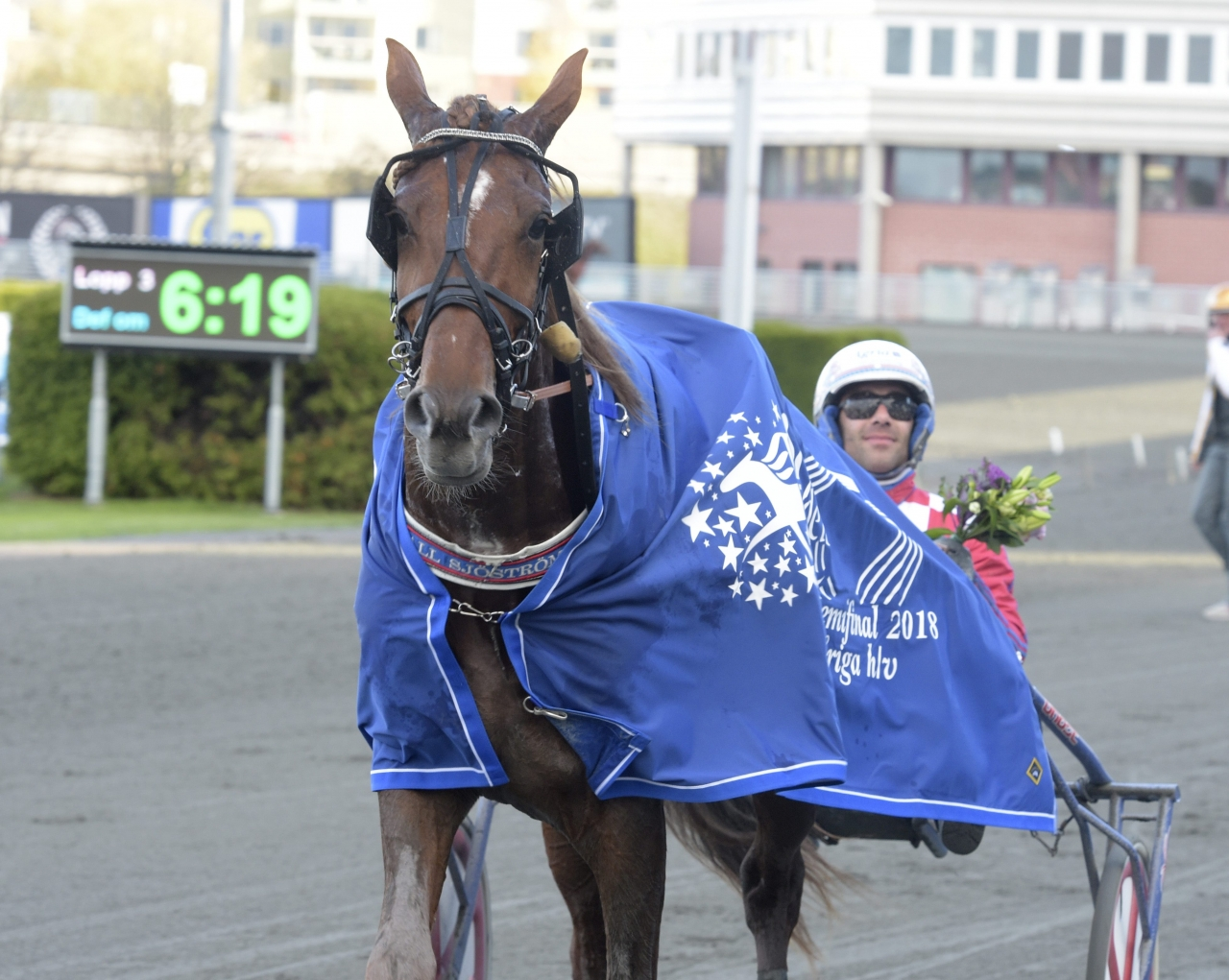 Jaguar Dream är den enda svenskfödda hästen som startar i Fyraåringseliten. Foto Leif Norberg/ALN