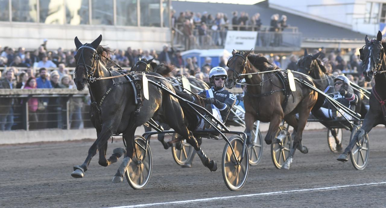 Petri Puros läckra sto Cash Crowe hade inga problem att vinna Sto-SM tillsammans med Christoffer Eriksson. Foto Sidmakarn