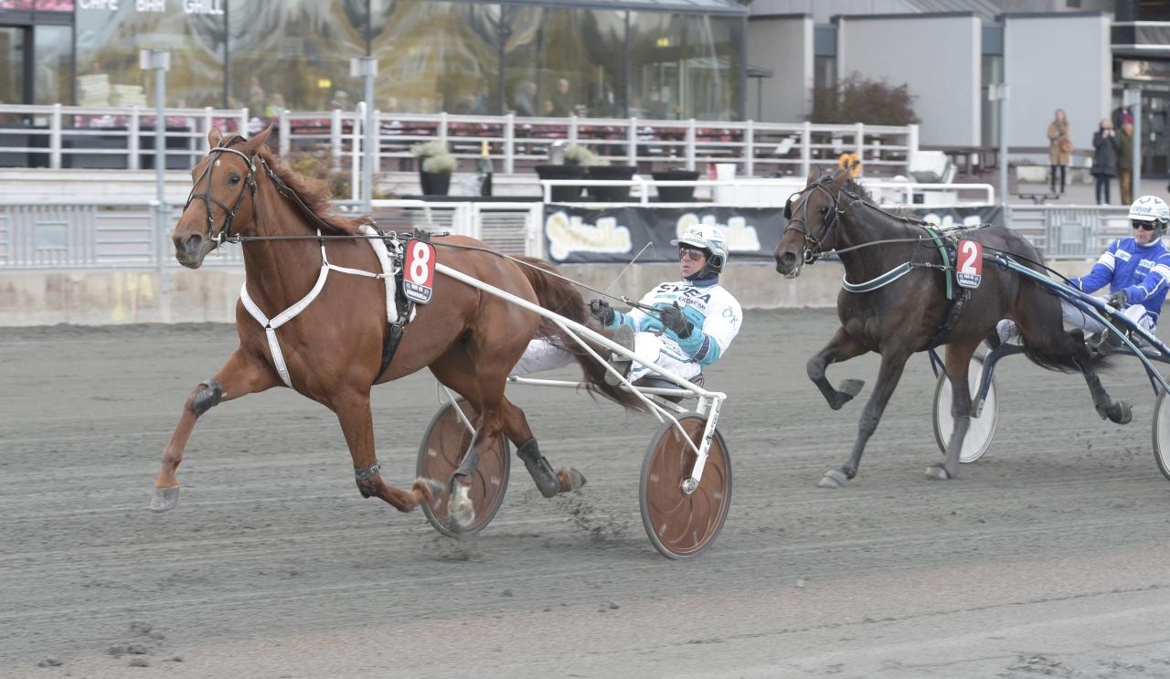 Oakssegrarinnan Conrads Rödluva tog hem den första semifinalen bland de treåriga stona. Foto Leif Norberg/ALN