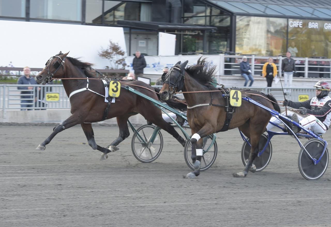 Derbyvinnaren Who´s Who var en av försöksvinnarna i Breeders Crown. Foto Leif Norberg/ALN