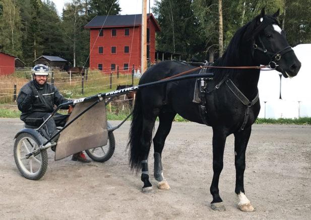 trav, travsport, sulkysport, kallblod, v75, skellefteå, avel