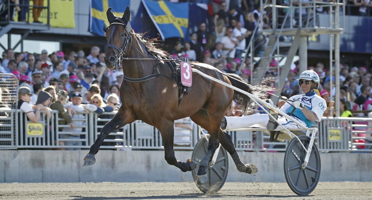 Propulsions uppladdning inför Elitloppet tar fart med start i Guldbjörken på Umåker på lördag. Foto Mia Törnberg/Sulkysport