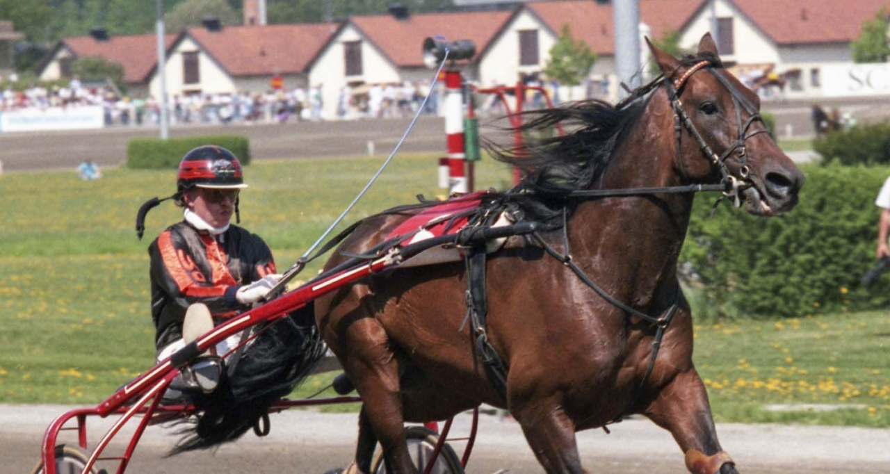 Elva säsonger på tävlingsbanan och mer därtill i avelsboxen. Tyske Reado var en stor profil för sporten som nyligen gick bort, 36 år gammal. Foto Stalltz.se
