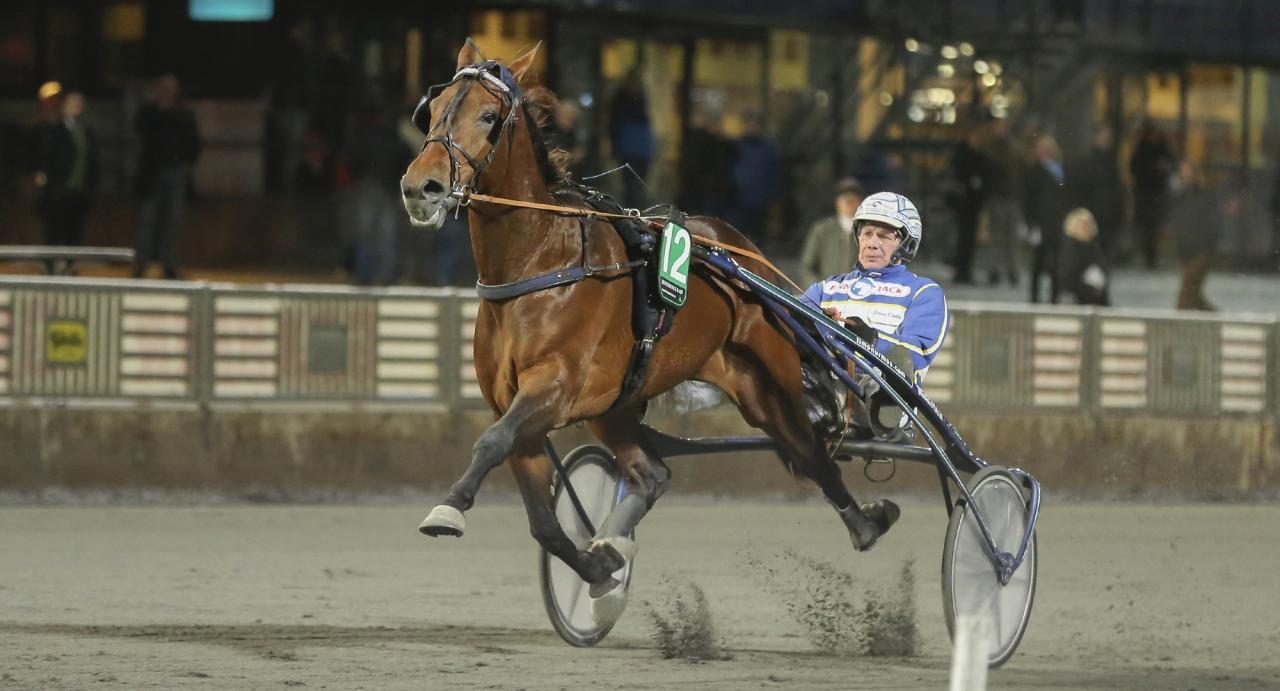 Amerindienne vid en tidigare seger på Solvalla. Igår övertygade han stort på Sundbyholm där hästen vann Påskbomben på 1.11,2. Foto Jeannie Karlsson/Sulkysport