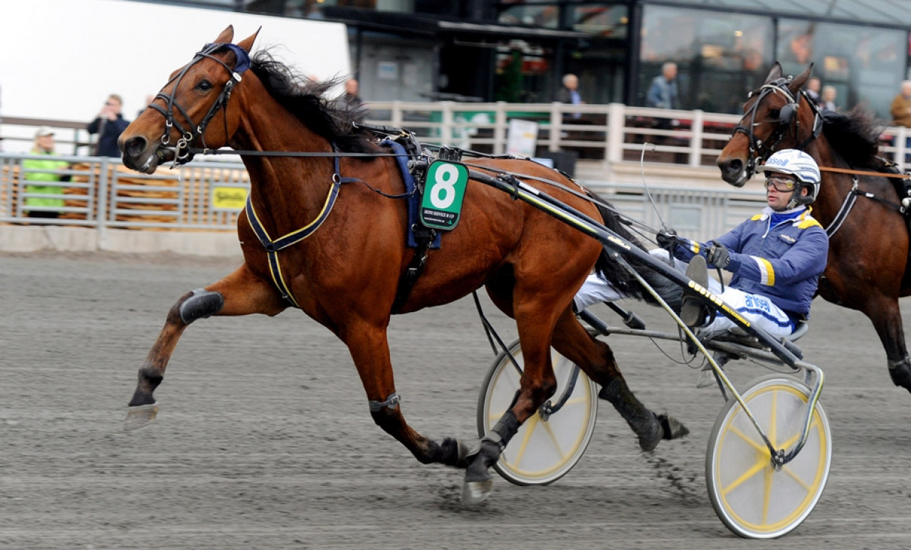 Born Unicorn har gjort två starter i Frankrike och båda under sadel. Idag slutade han trea för David Thomain. Foto: Adam Ström/stalltz.se
