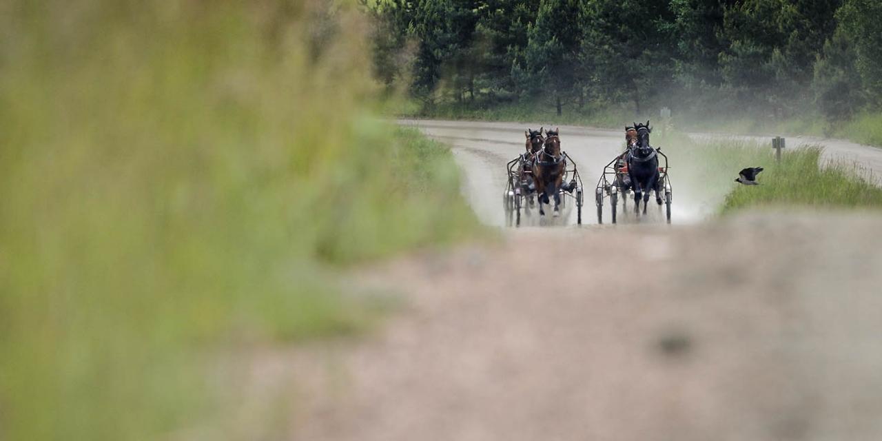 Antalet hästar i träning minskar. Foto Mia Törnberg/Sulkysport