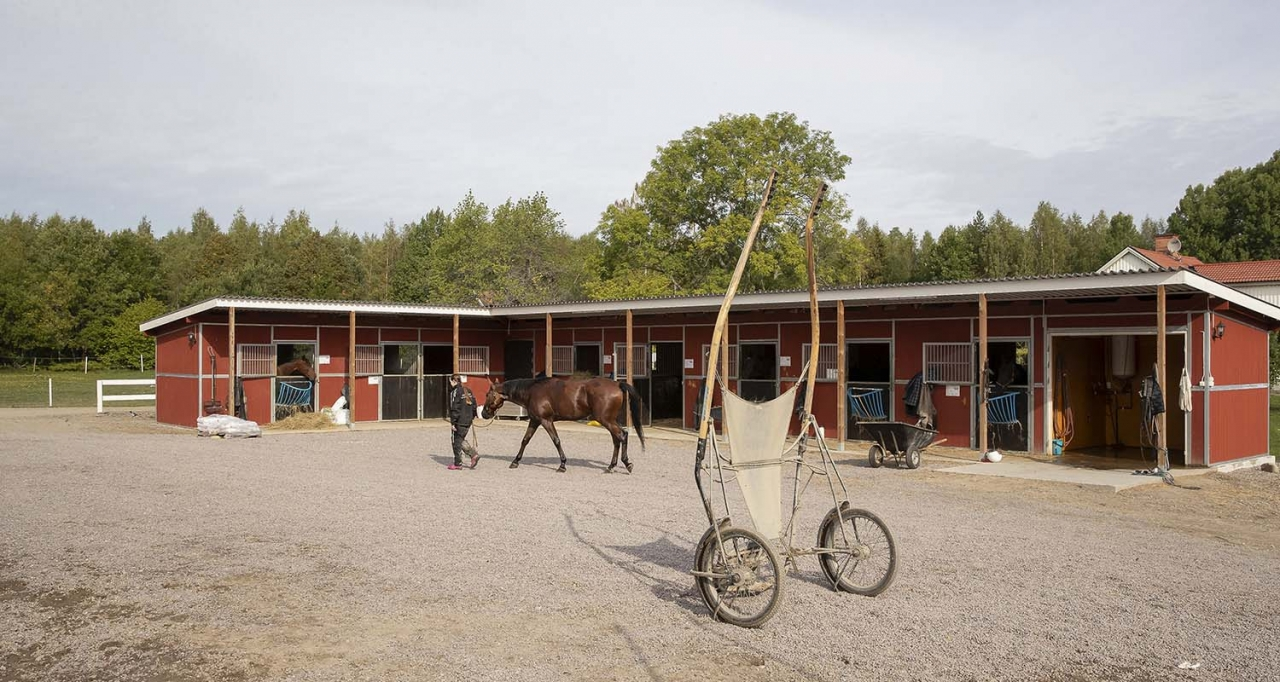 Krönikören tycker att vi ska vara mer rädda om hästskötarna. Foto Jeannie Karlsson/Sulkysport