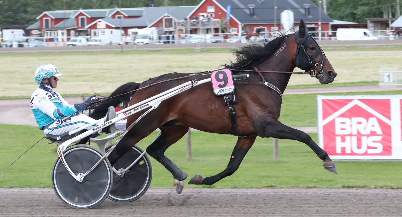 Perfect Spirit eller Who's Who? Ett av flera toppmöten när Breeders Crown-finalerna avgörs i Eskilstuna på söndag. Foto: Jeannie Karlsson
