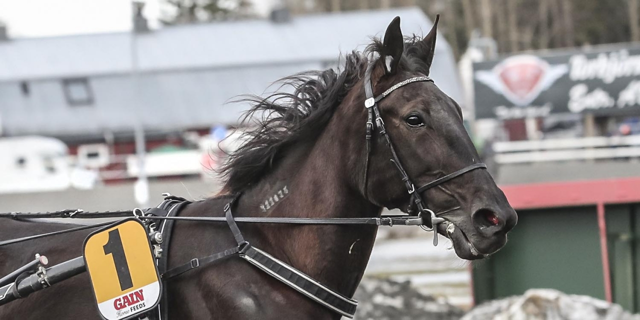 Ellieann laddas för start på Vincennes. Foto Jeannie Karlsson/Sulkysport