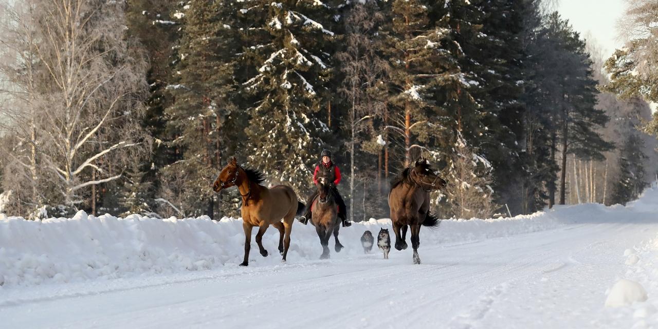 Linda Holmgren är ute och tränar sina tre hästar. Foto Mia Törnberg/Sulkysport