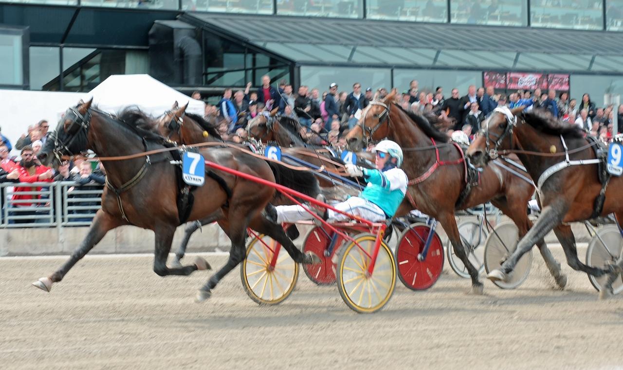 King City och Örjan Kihlström vid en av sina segrar tillsammans på Solvalla: Foto Claes Kärrstrand