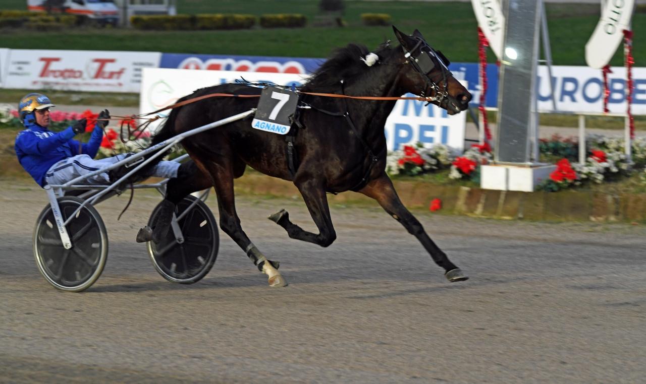 Björn Goop vann Gran Premio Mipaaft Filly (€88.000) med Erik Bondo-tränade All Wise As förra året. Ikväll tog hon sin första seger för säsongen. Foto: Gerard Forni