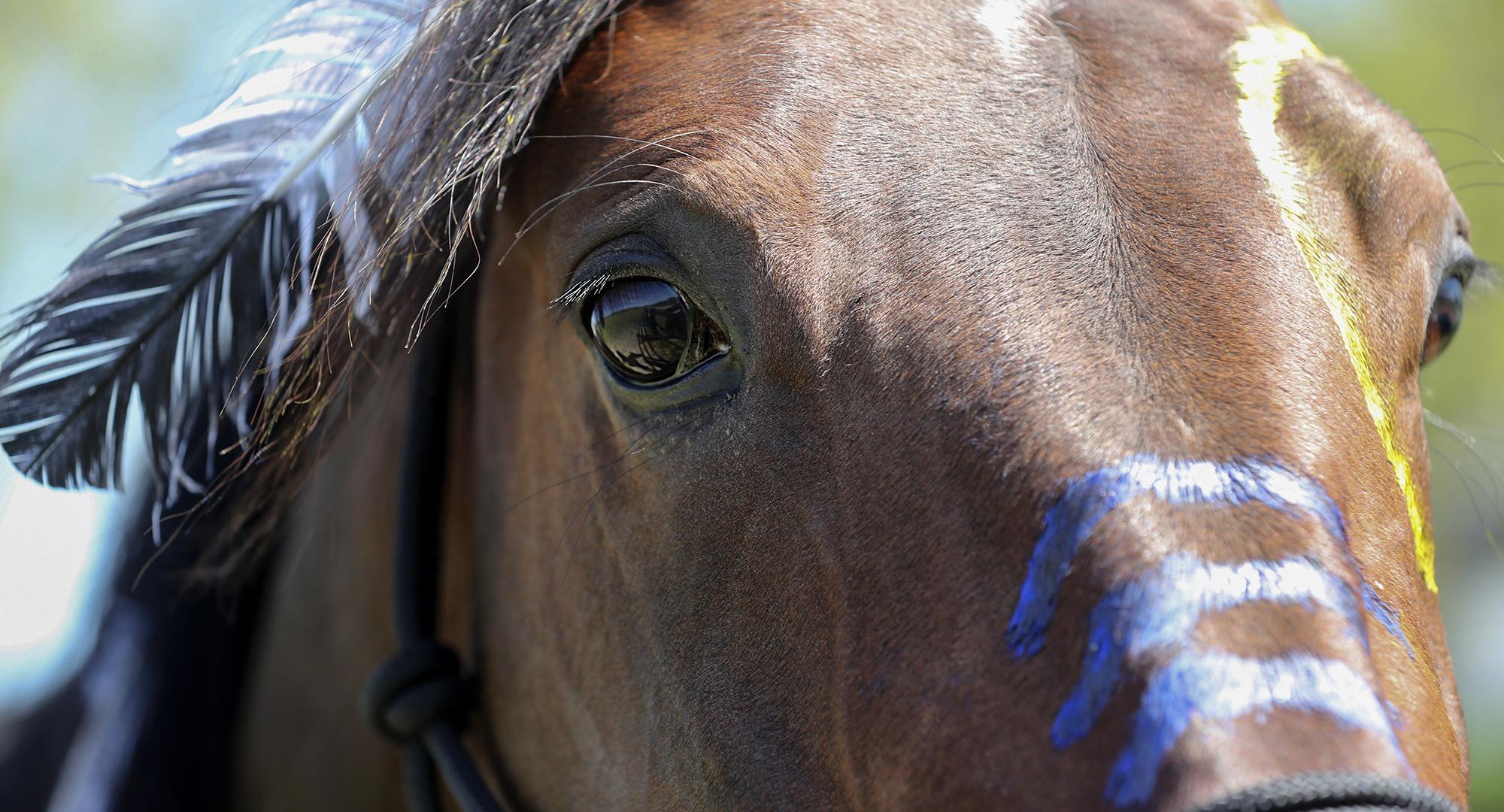 Propulsion med krigsmålning, travhäst, Sulkysport, Travsport