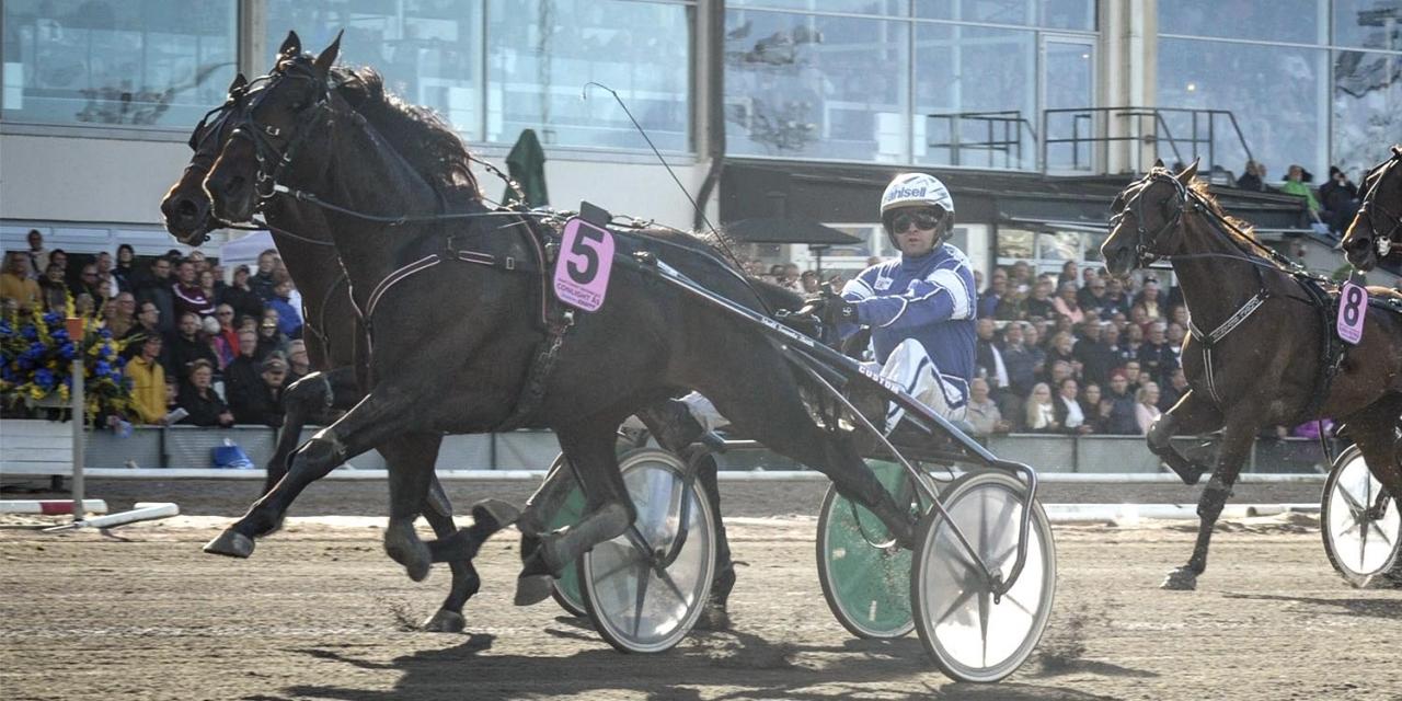 Conlight Ås segrade bland annat i Svenskt TravDerby. Foto Leif Norberg/ALN
