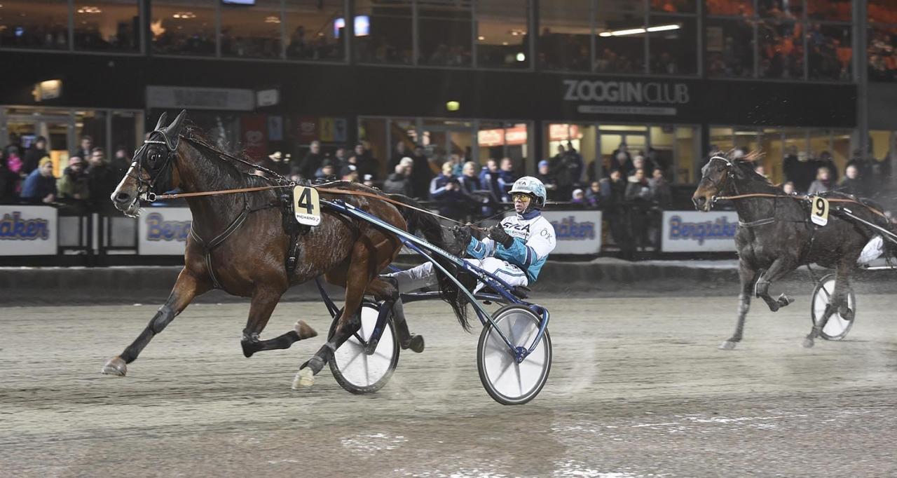 Vinterexperten Zenit Brick trivs på Bergsåker. På sex försök har han fyra segrar och ett andrapris. Foto Christer Norin/ALN