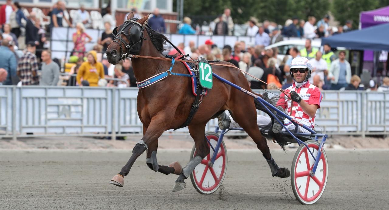 Claes Sjöströms Bizzi Blizz har varit fin i två raka segrar. På onsdag möter hon på obesegrade Zourane Kronos i V86-8.  Foto Jeannie Karlsson