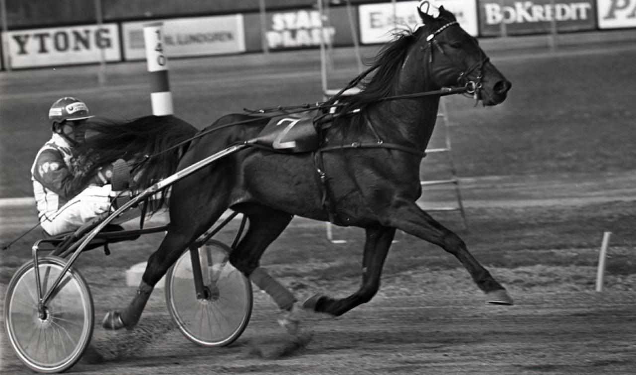 Sven Schöns främsta uppfödning var Don Kiwin och han var en följetong i rikstoton under andra halvan av 1987. Foto: Stefan Melander/stalltz.se