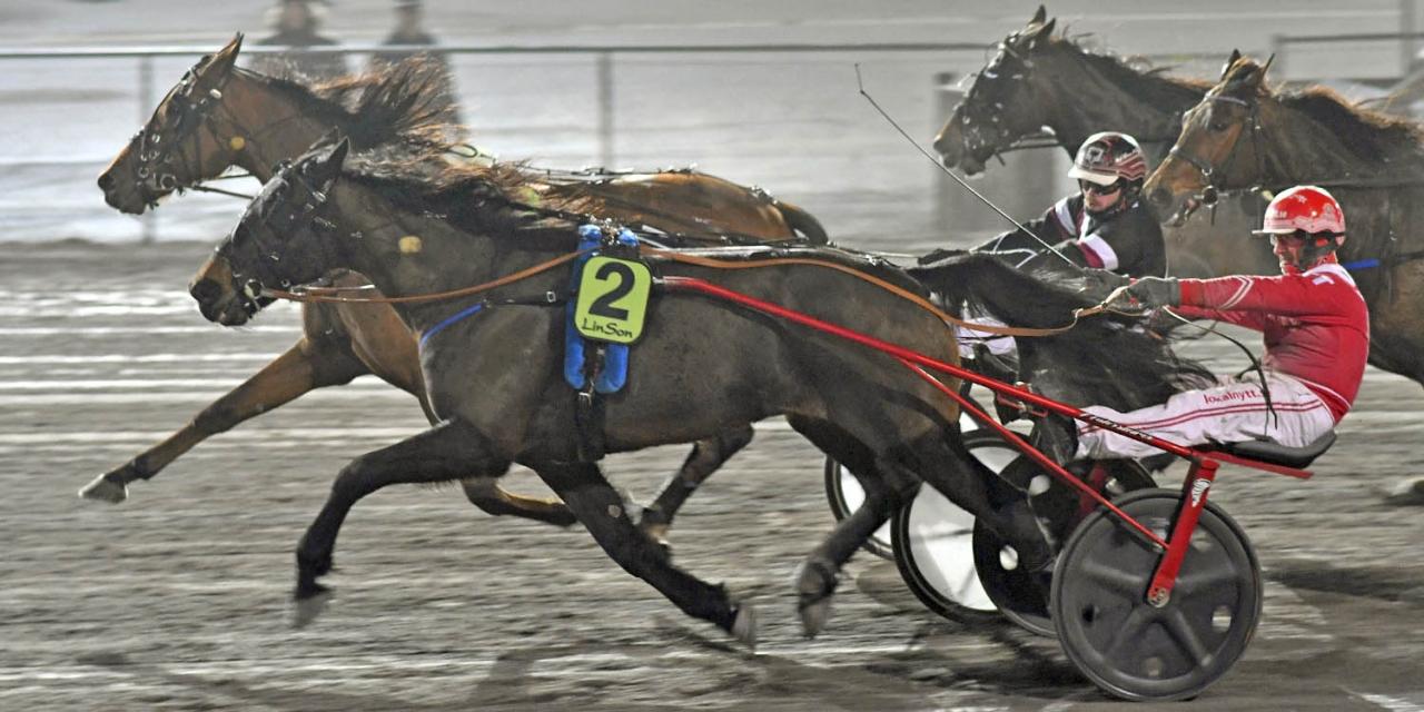 Dynamite Light var en av fyra vinnare från Stall Kolgjini under tävlingskvällen på Halmstadtravet. Foto Lars B Persson