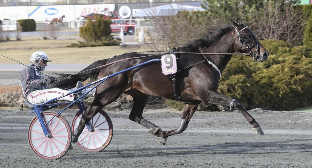 Lightningsky imponerade senast på 1.14,1/2.160 meter. I samma lopp startar urstarke Perfect Dynamite och ytterligare flera namnkunniga hästar.  Foto Jeannie Karlsson