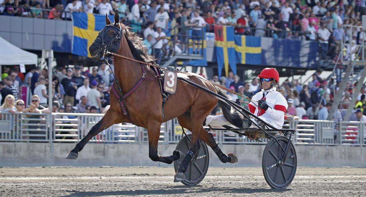 Fjolårets vinnare av Harper Hanovers lopp Platon Face är en av flera starka hästar som drabbar samman i gulddivisionen på lördag. Foto Mia Törnberg