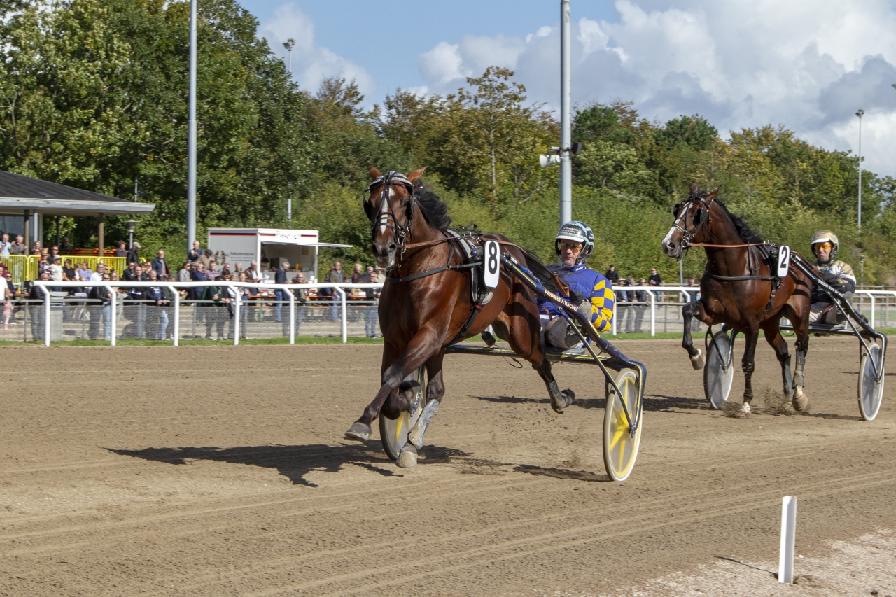 Eric the Eel vid seger i Auktionslopp i Ålborg ifjol. Idag vann han i Follonica i Italien. Foto: Kjeld Mikkelsen