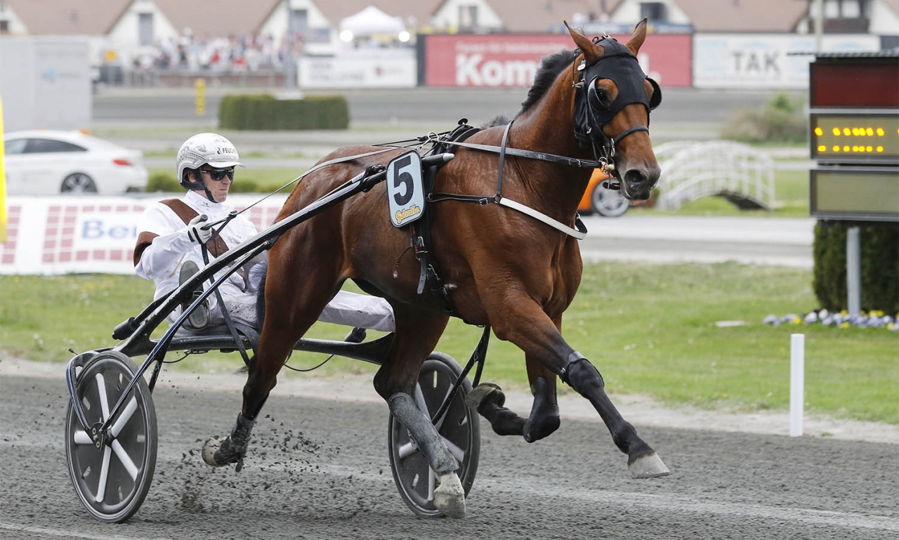 Dijon kommer tillbaka till Solvalla en sista helgen i maj. Foto Jeannie Karlsson