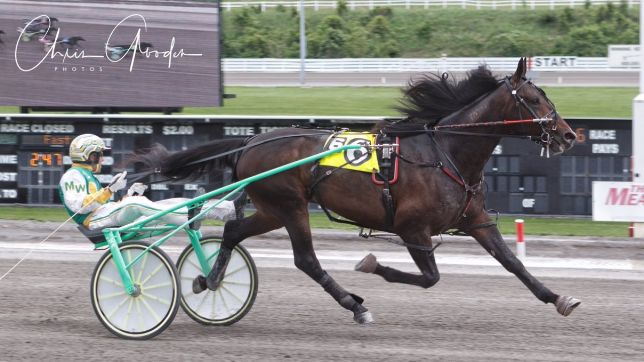 Thisguyisonfire startar i Can-Am Pick 4 på Meadowlands i natt. Foto: Chris Gooden
