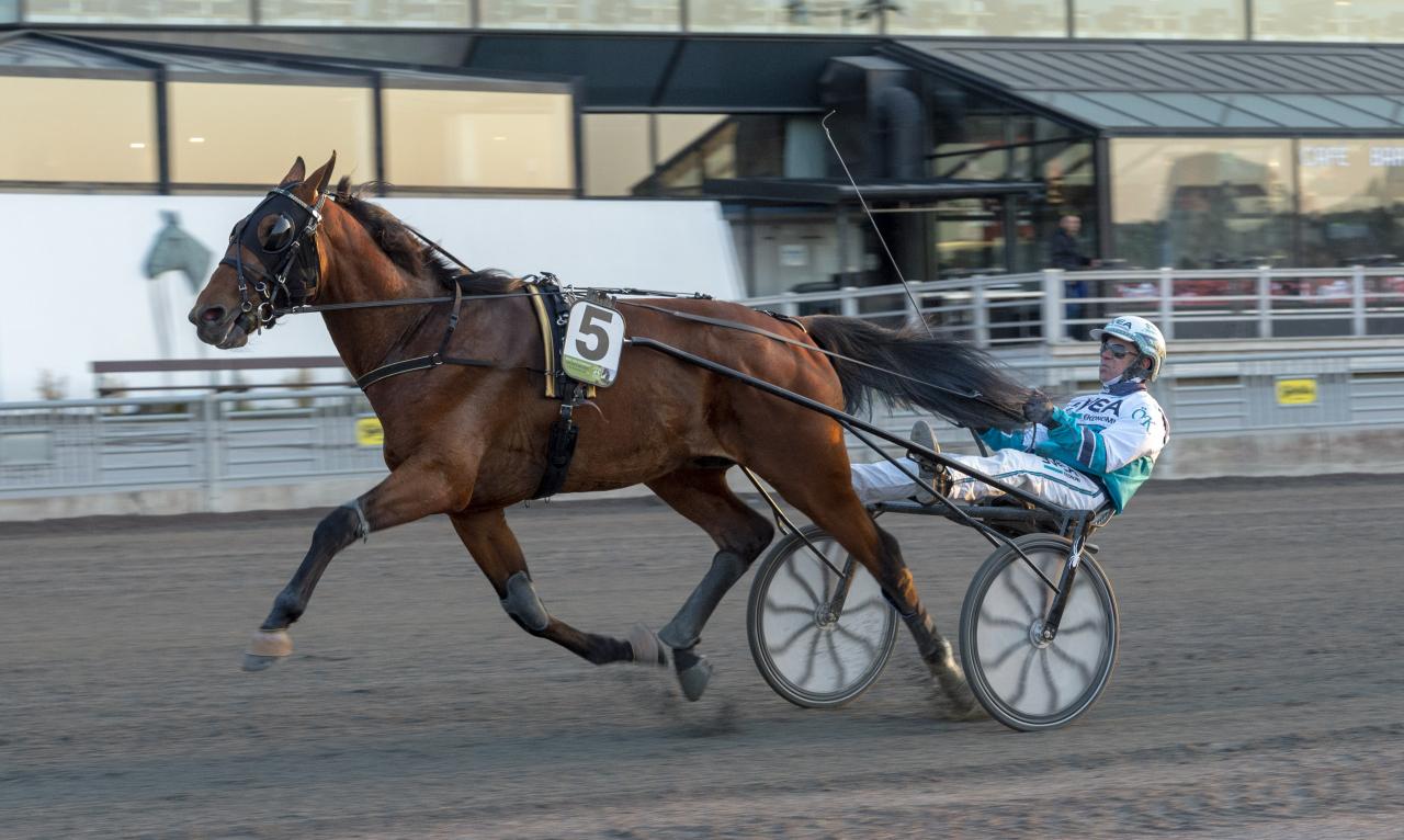 Acciaio är en av två hästar från Alessandro Gocciadoros stall i Breeders Course-finalen. Foto: Tommy Andersson, ALN