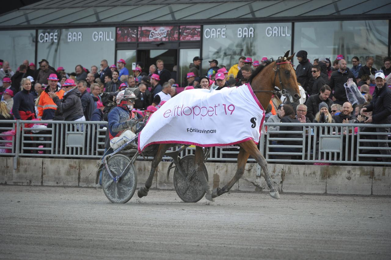 Aubrion du Gers fick välja spår först av försökvinnarna och den franske stjärnan börjar från innerspår i finalen. Foto Simon Hagen/Sulkysport