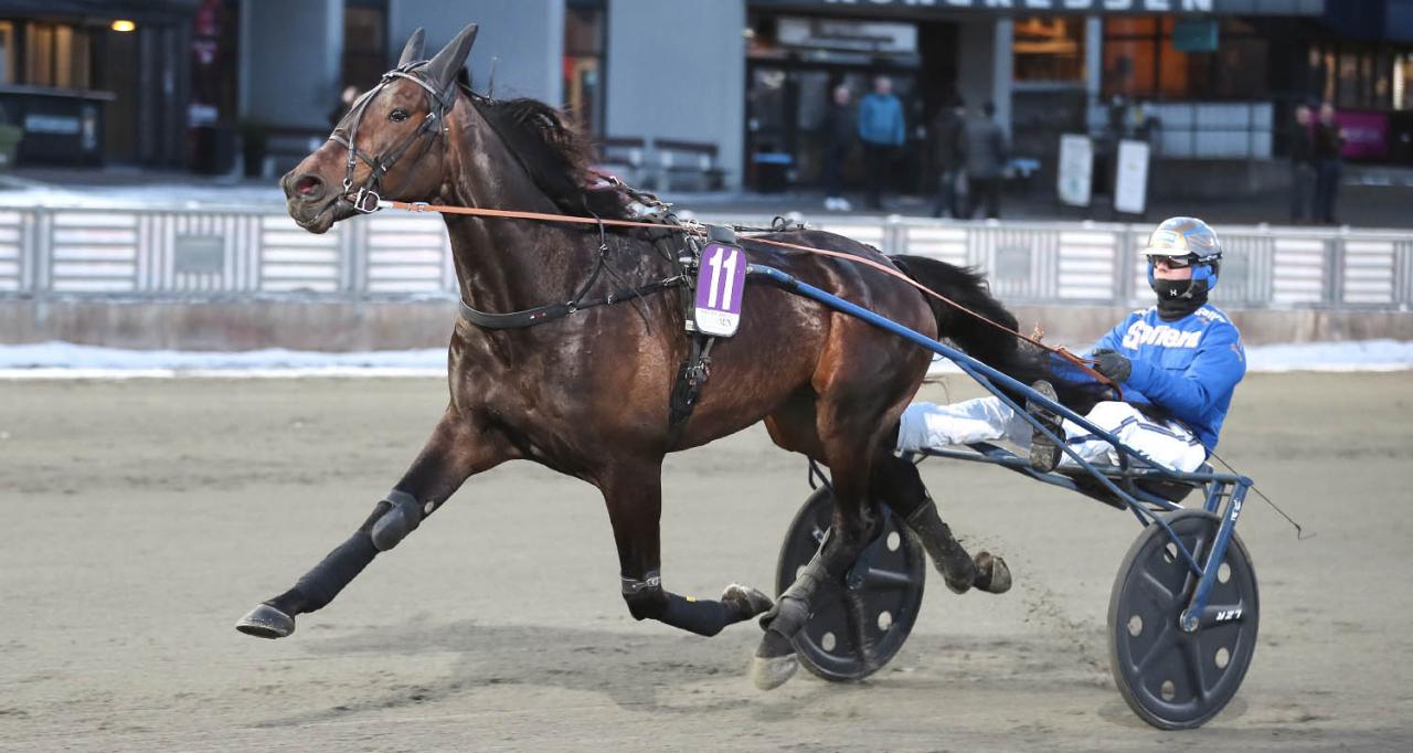 Fairplay Pellini har hittills i år vunnit två av fyra starter. Foto Jeannie Karlsson/Sulkysport