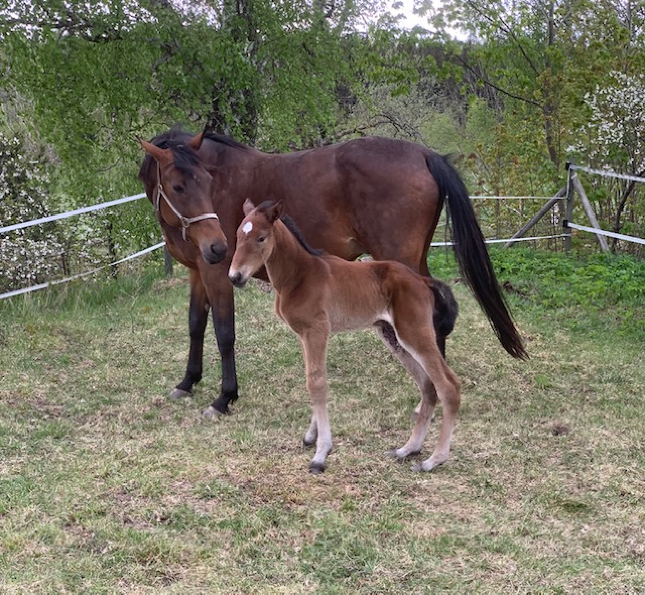 Elin Topline med sin dotter efter Scarlet Knight. Foto: privat