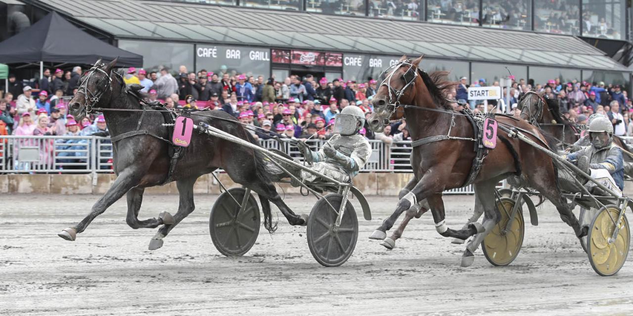 Missle Hill och Örjan Kihlström vann på bilden Fyraåringseliten. Under torsdagen spetsade hästen hem Fyraåringsstjärnan i Gävle. Foto Mia Törnberg