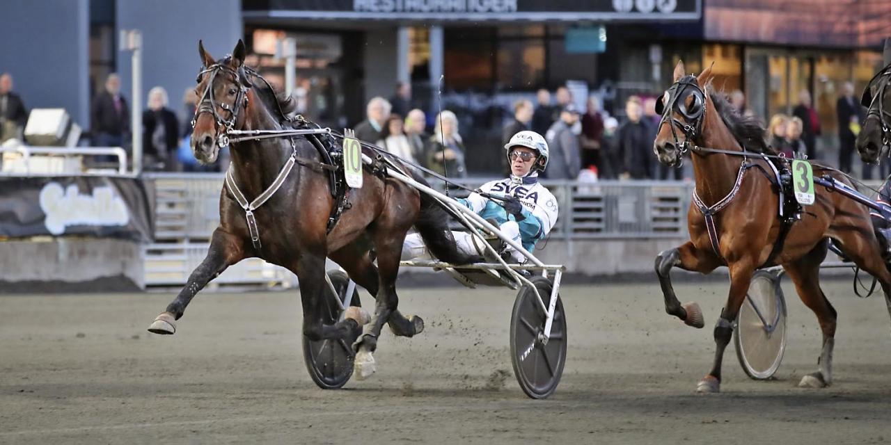 Perfect Spirit ska starta i Gotlandslöpningen. Foto Mia Törnberg/Sulkysport
