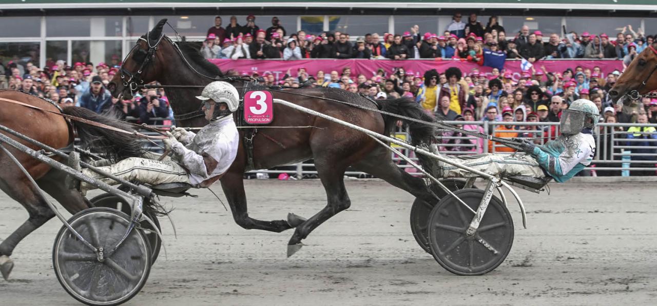 Propulsion är tillbaka på banan igen efter Elitloppet. Skådeplatsen blir som vanligt Boden, där han jagar fjärde raka segern i Norrbottens Stora Pris. Foto Mia Törnberg