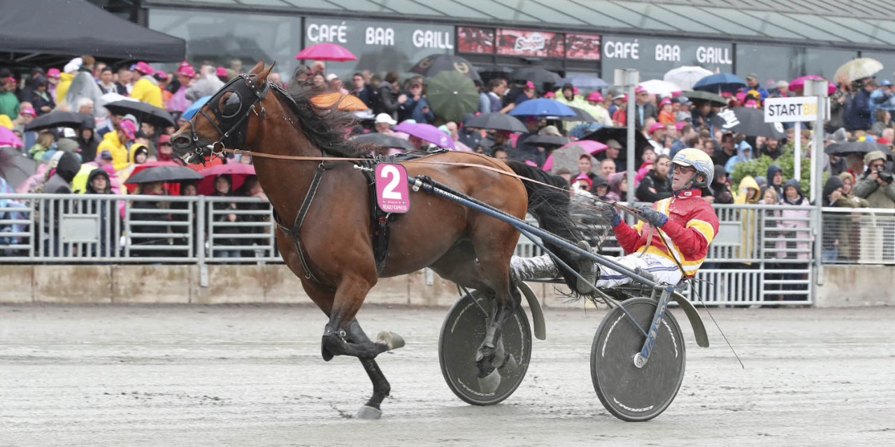 Readly Express i galopp inför Elitloppsfinalen. Foto Simon Hagen/Sulkysport