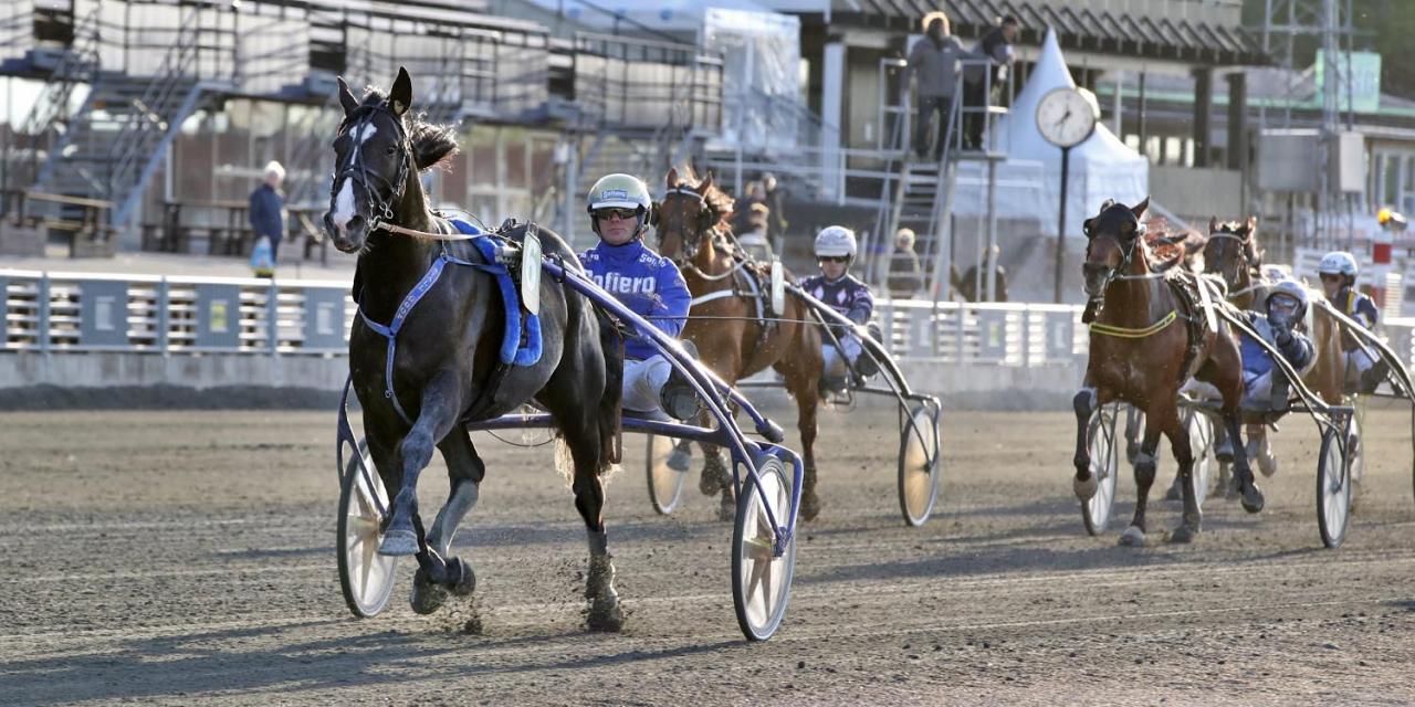 Short In Cash imponerade i årsdebuten för Björn Goop och har därefter även vunnit ett klass I-försök. På fredag startar han i Axevalla Maraton. Foto Mia Törnberg/Sulkysport