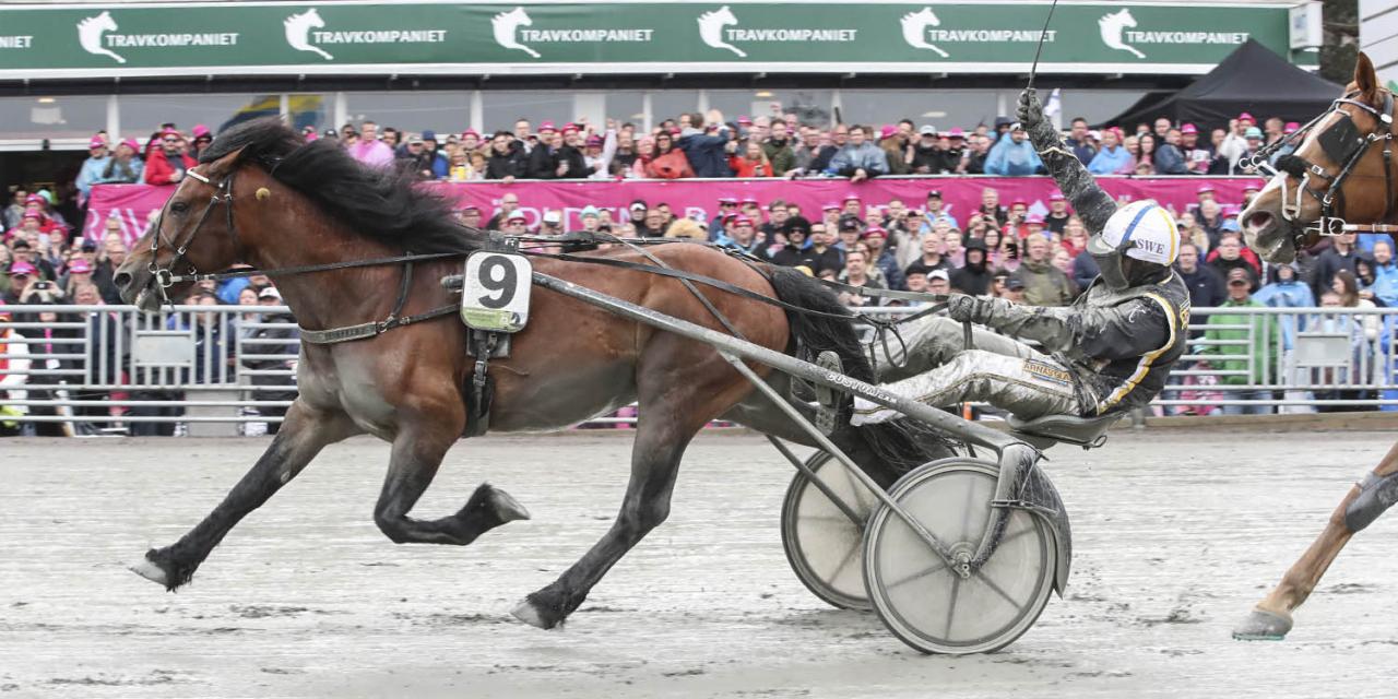 Elitkampen-vinnaren Tangen Haap startar i Bollnästravets Elitsprint kommande onsdag. Foto Mia Törnberg