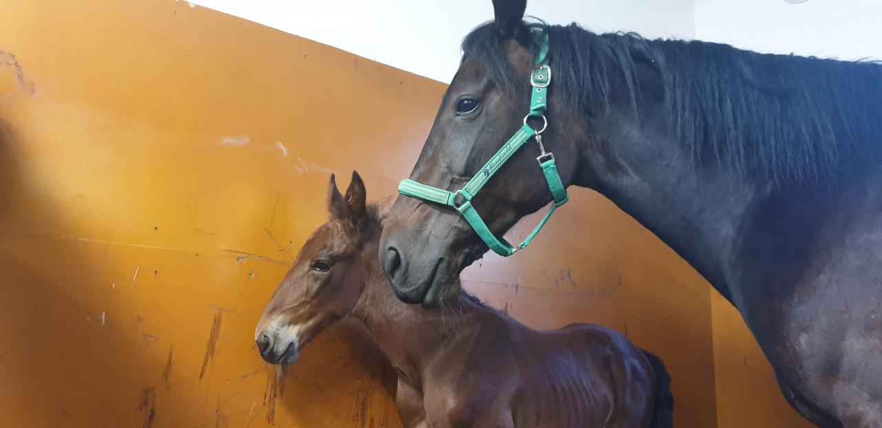 Oops Trot med sin son efter Quarcio du Chene. Foto: privat