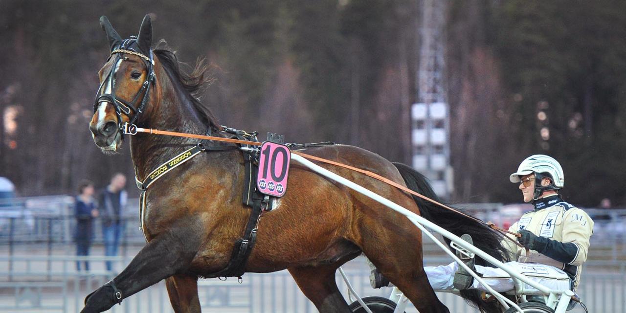 Byter vagn mot sadel. Fossens Bonus gör montédebut i livets 66:e start. Tränare Jakobsson står vid sidan, men låter försiktigt optimistisk. Foto Simon Hagen