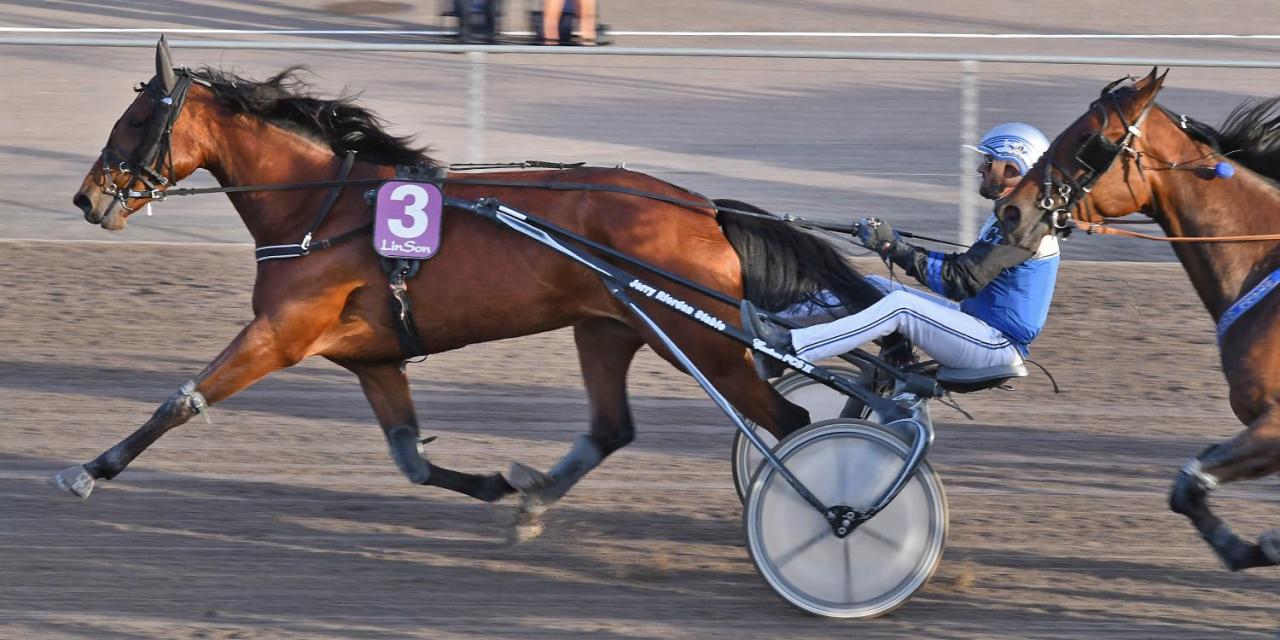 Jerry Riordans Maggie Cash startar från spår 3 i finalen. Foto Lars B Persson