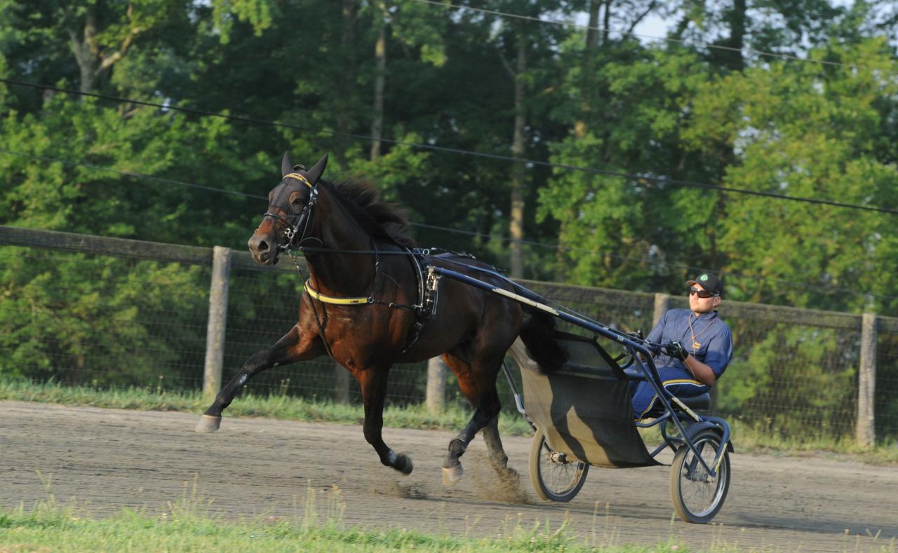 Marcus Melander hade fullt upp idag och i morse gick alla hans Hambo-hästar jobb på gården och däribland Greenshoe (bilden) plus att han hade starthästar i Chester. Foto: Adam Ström/stalltz.se